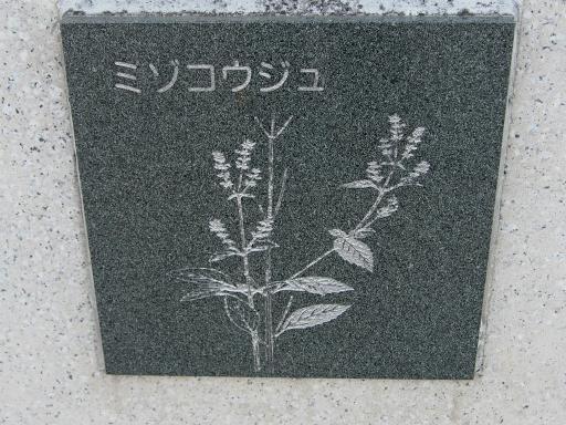 20151227・狭山湖散歩2-12・中