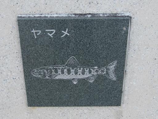 20151227・狭山湖散歩2-13・中