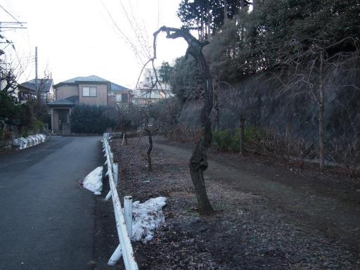 20160205・散歩08