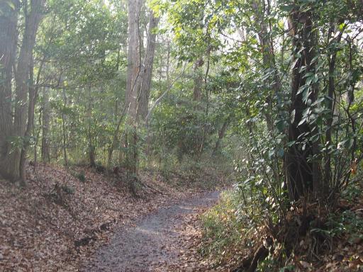 20160214・春の狭山湖1-03