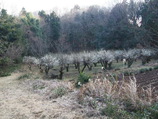 20160214・春の狭山湖1-09