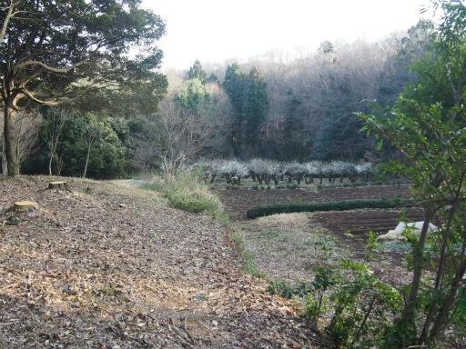 20160214・春の狭山湖1-08