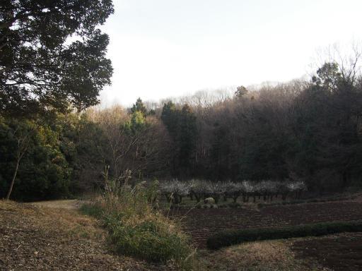 20160214・春の狭山湖1-07