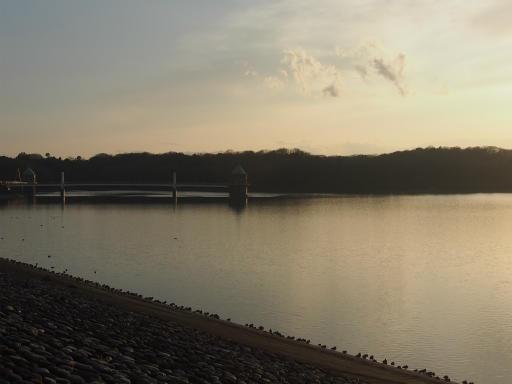 20160214・春の狭山湖2-13