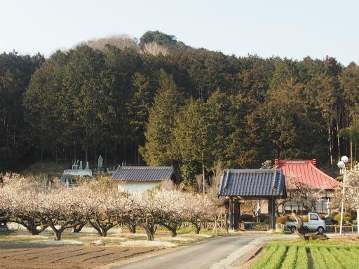 20160227・越生梅見5-03・真ん中の高いのが弘法山