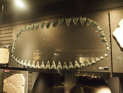 科博2015骨格標本展示-1