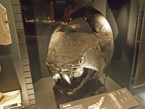 科博2015骨格標本展示-2