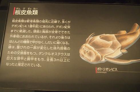 科博2015骨格標本展示-3