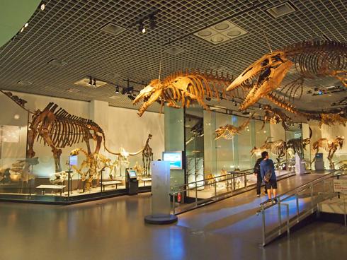 科博2015骨格標本展示-4