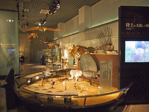 科博2015骨格標本展示-5
