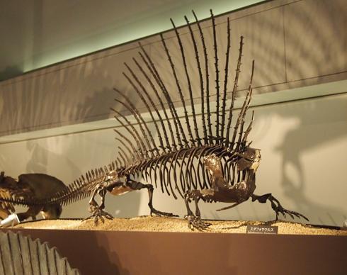 科博2015骨格標本展示-6