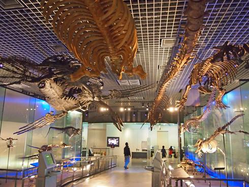 科博2015骨格標本展示-7