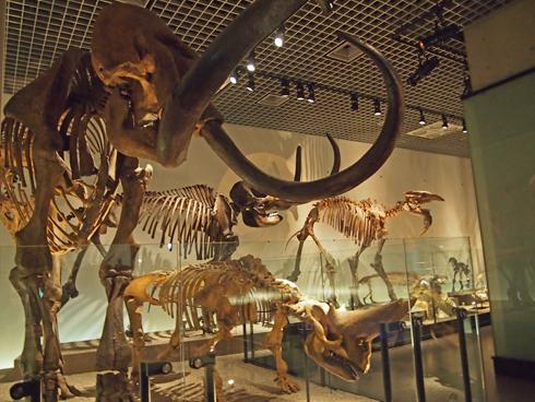 科博2015骨格標本展示-8