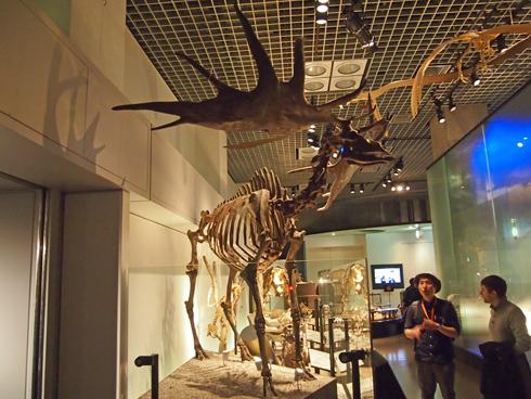 科博2015骨格標本展示-11