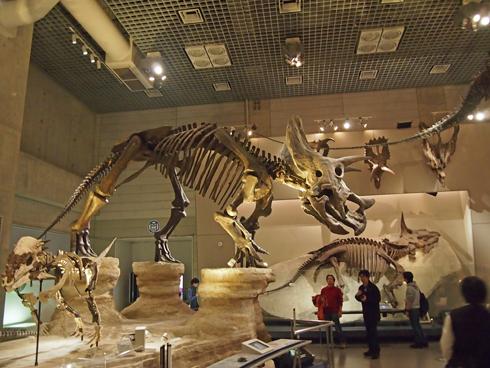 科博2015骨格標本展示-12