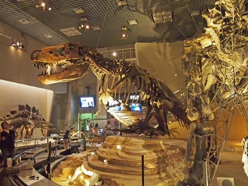 科博2015骨格標本展示-13
