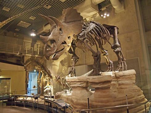 科博2015骨格標本展示-14