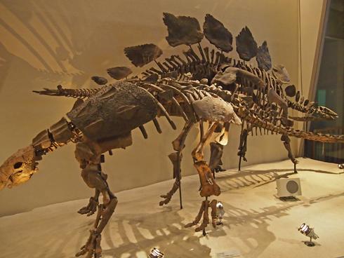 科博2015骨格標本展示-15