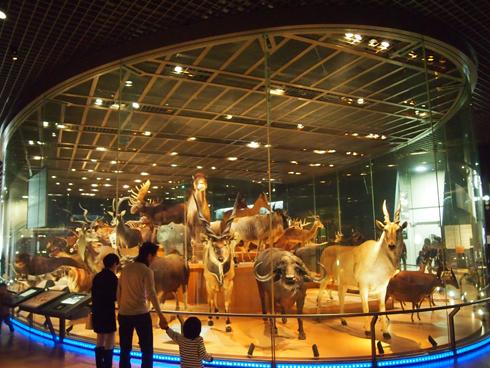 科博2015大型動物剥製展示-1