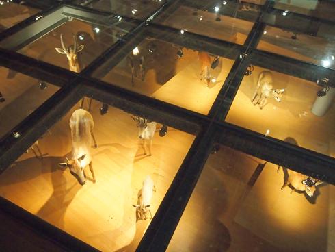 科博2015大型動物剥製展示-6