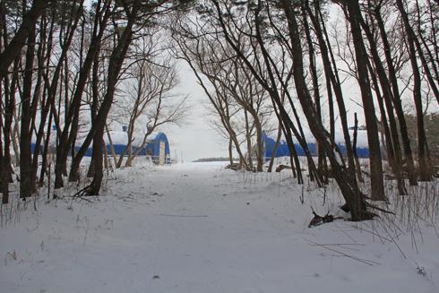 冬の寒立馬2016-4