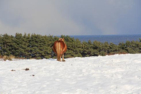 冬の寒立馬2016-8