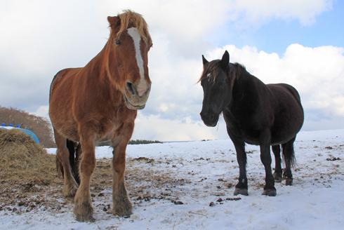 冬の寒立馬2016-12