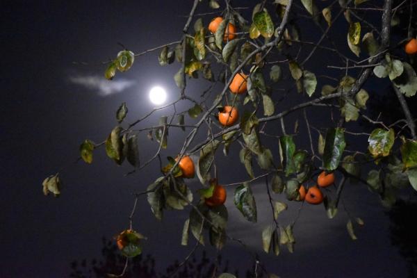 151026-月夜の柿