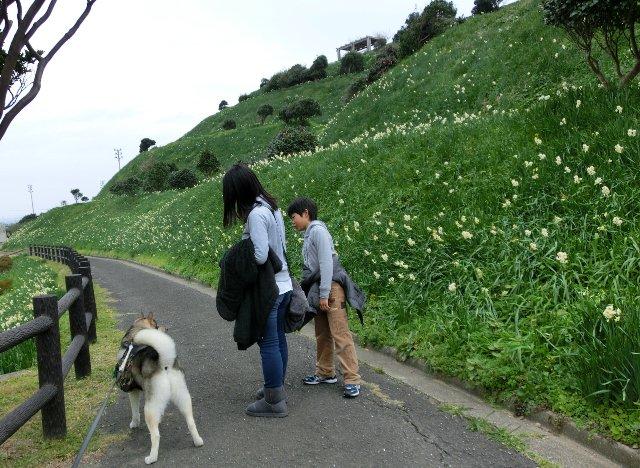 水仙公園1