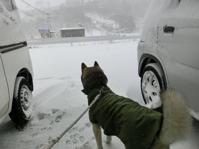 1月24豪雪