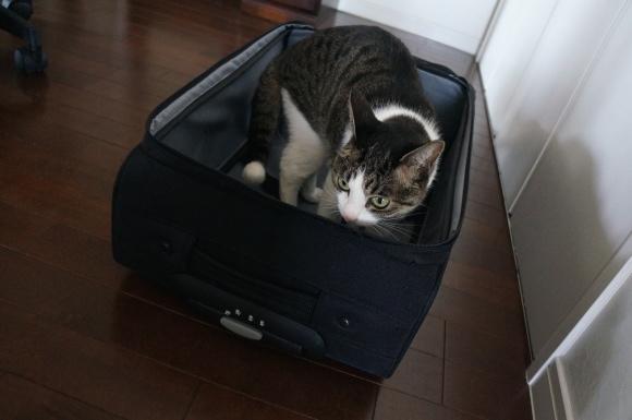 バッグもまた、猫ホイホイである。