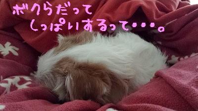 20160127_084050(1).jpg