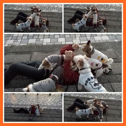 cats897uy676tt.jpg