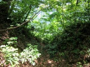 栃尾城/堀切(詰めの丸奥)