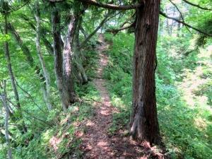 栃尾城/馬の背のような道