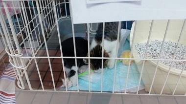 子猫譲渡会5