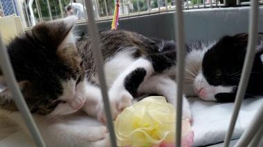 子猫譲渡会3