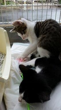 子猫譲渡会4