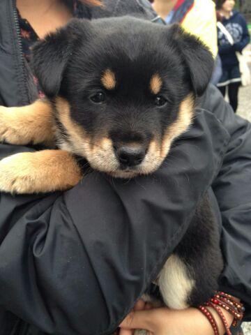 栃木子犬2