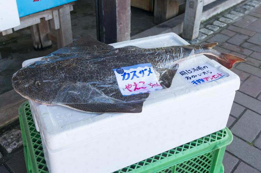 カス鮫のやえこちゃん
