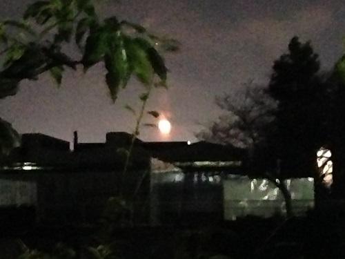 月明かりの下で-自然の力に癒される-1