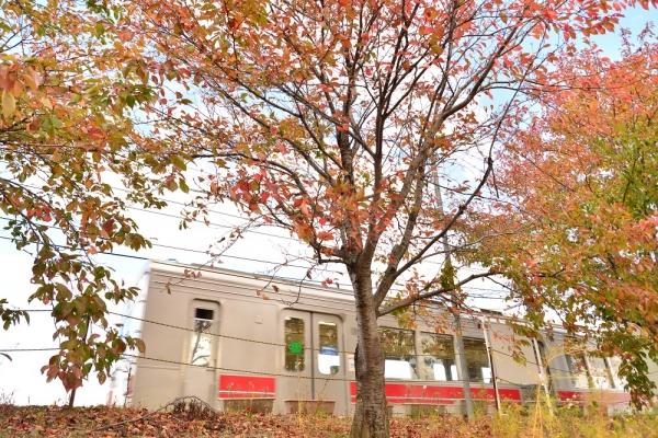 2015年10月28日 上田電鉄別所線 舞田 1000系1001編成