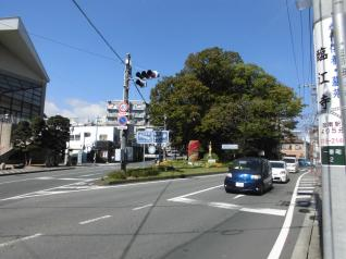 道の間の大木