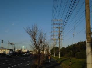 堺港第5区線