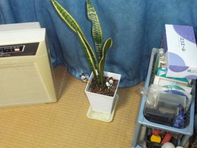 分けた観葉植物の1つは居室南窓側へ配置した写真