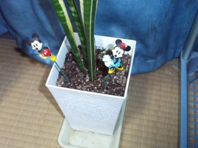 観葉植物の株分けし居室に置いた鉢にはにはミッキーマウスとミニーマウスの人形もつけた写真