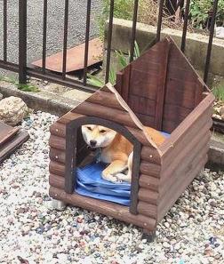 柴犬のオープンハウスでおもしろ写真