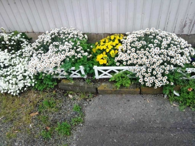先週撮った玄関花壇の花たち
