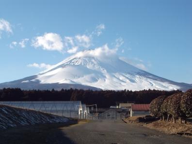 平成16年1月24日日曜日の富士山を御殿場市の野原から写真撮影