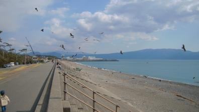 静岡県沼津市の千本浜に集うカップルや家族と海カモメの写真が絵になったデジカメ写真